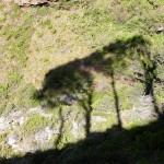 4 tree shadows