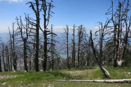 Albania Kukes Gjallica dead forest