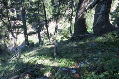 Albania Kukes Gjallica forest
