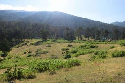 Albania Kukes Gjallica plateau