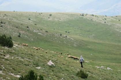 Albania Kukes Gjallica shepherd boy