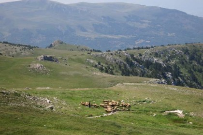 Albania Kukes Gjallica tableland