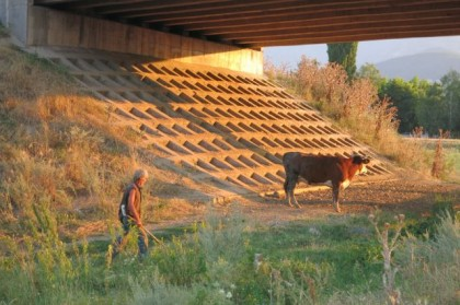 Hitchhiking Macedonia Bulgaria cow in sunset