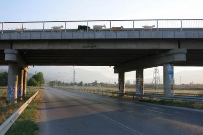 Hitchhiking Macedonia Bulgaria goats on bridge
