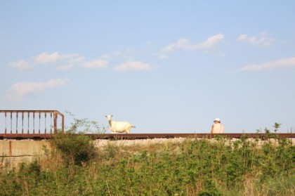 Hitchhiking Macedonia Bulgaria man and goat