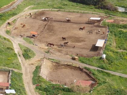 Kourion horses