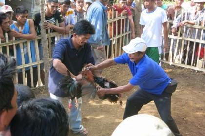 Philippines, Manila - chicken fight end