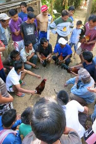 Philippines, Manila - chicken fight planning