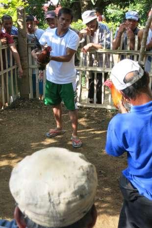 Philippines, Manila - chicken fight starting
