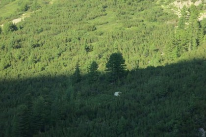 Pirin Mountains tree shadow