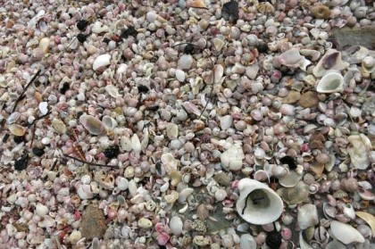 Prachuap Khiri Khan beach shells