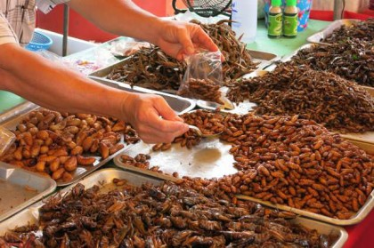 Prachuap Khiri Khan eating insects