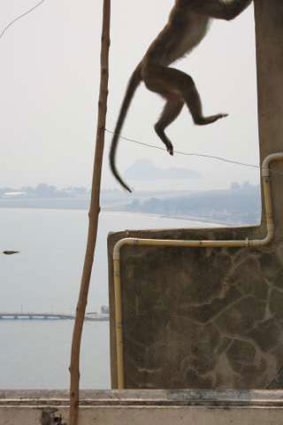 Prachuap Khiri Khan monkey jumping