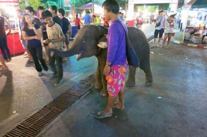 Ratchaburi baby elephant