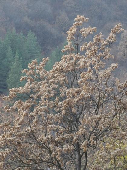 Alpine Meadow - autumn