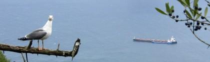 Bird and cargo ship, Gibraltar view