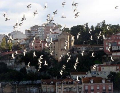 Bird watching, Lisbon (Portugal)