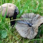 Broken mushroom