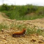 Caterpillar Cyprus