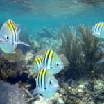 Caye Caulker - funny fishes