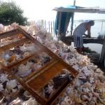 Caye Caulker - empty sea shelves