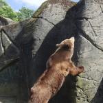 Copenhagen zoo: bear
