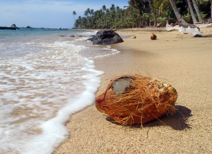 Corn Island beach with coconut