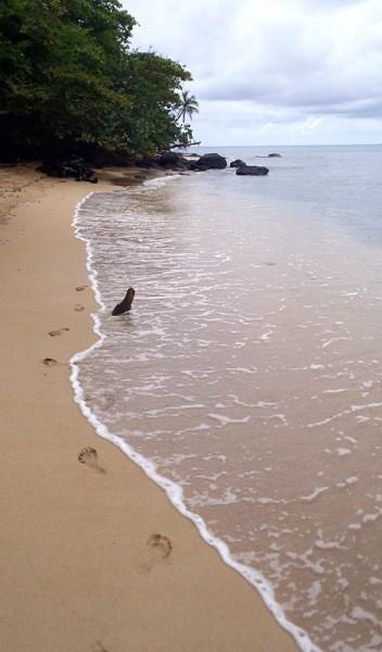 Corn Island Caribbean beach