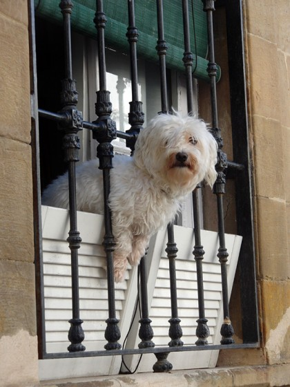 Dog in window, Tarifa