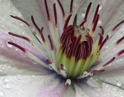 Flower macro closeup