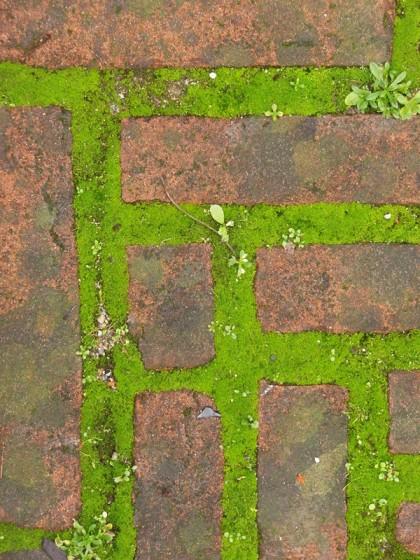 Green grass pathway Milano