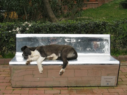 Homeless dog sleeping on a bench