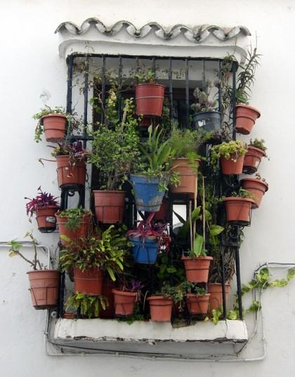 House plants on mini balcony, Tarifa