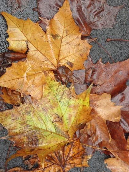 Milano big leaves on street