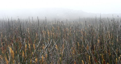 Misty field on mountain top
