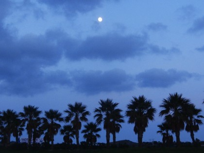 Moon over palms in Tarifa