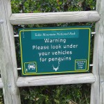 Penguins under vehicles warning