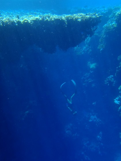 Ras Muhammad freediving