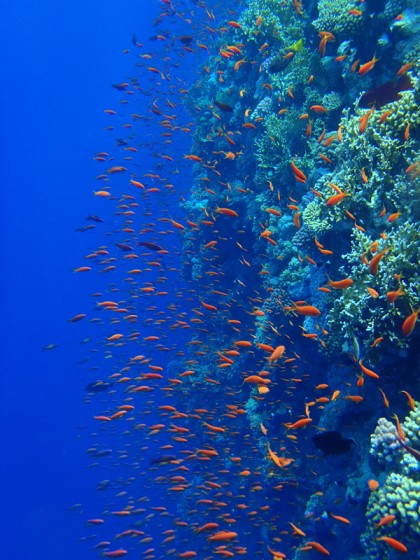 Ras Muhammad shark reef
