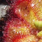Red yellow mountain flower macro