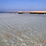 Shark bay Sharm Egypt