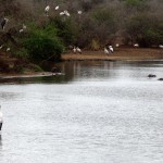 Storks and hippos