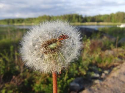 Sweden pictures (14)