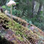 Swedish mushrooms