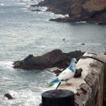 Tenerife bird