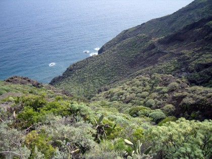Tenerife nature