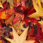Yellow red leaves