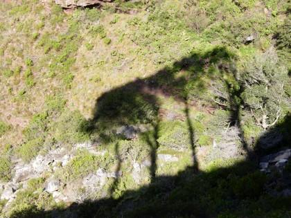 4 tree shadows