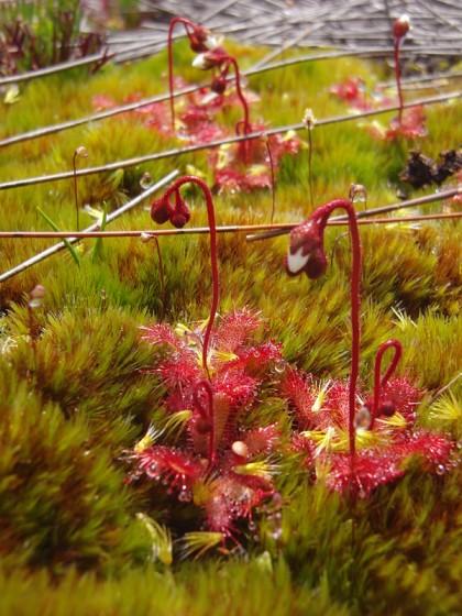 Unknown beautiful macro flower in swamp