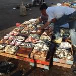 Alexandria fish market